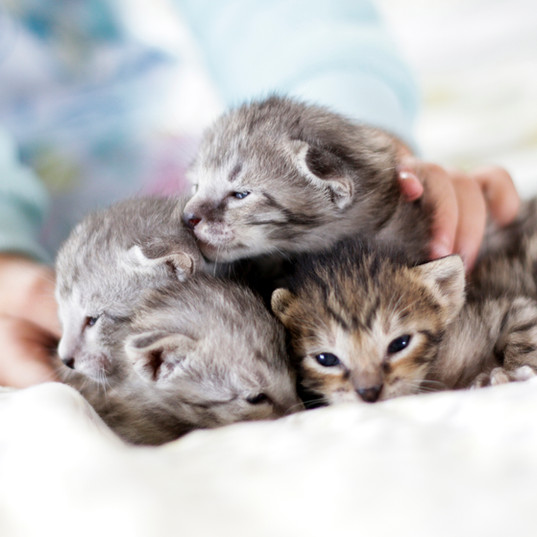 Cute Savannah Kittens 7.jpg