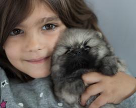 Charlie the Pomeranian Puppy 12.jpg