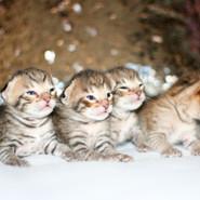 All Savannah kittens IMG_0772.jpg
