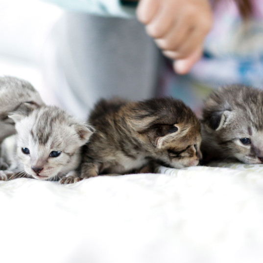 Cute Savannah Kittens 1.jpg