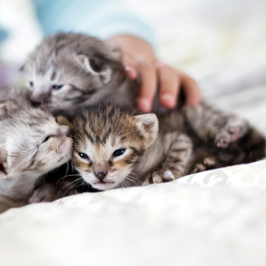 Cute Savannah Kittens 8.jpg