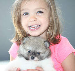 pomeranian parti puppy and artemis-crop-
