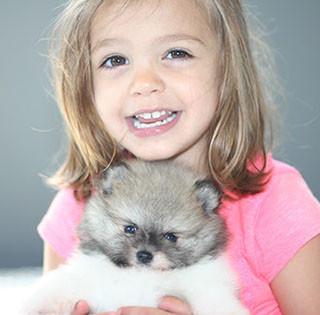 Parti Pomeranian Puppy
