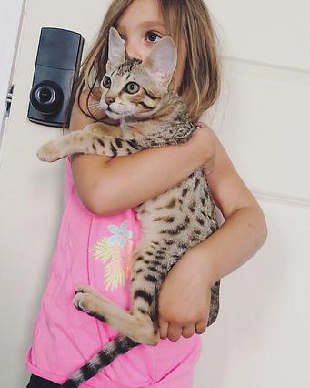 Savannah Kitten Majestic.JPG