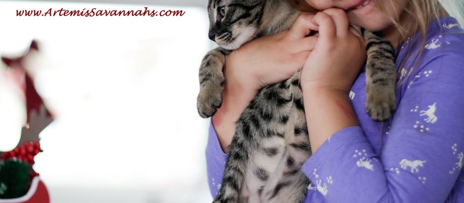 Savannah Cat Breeders