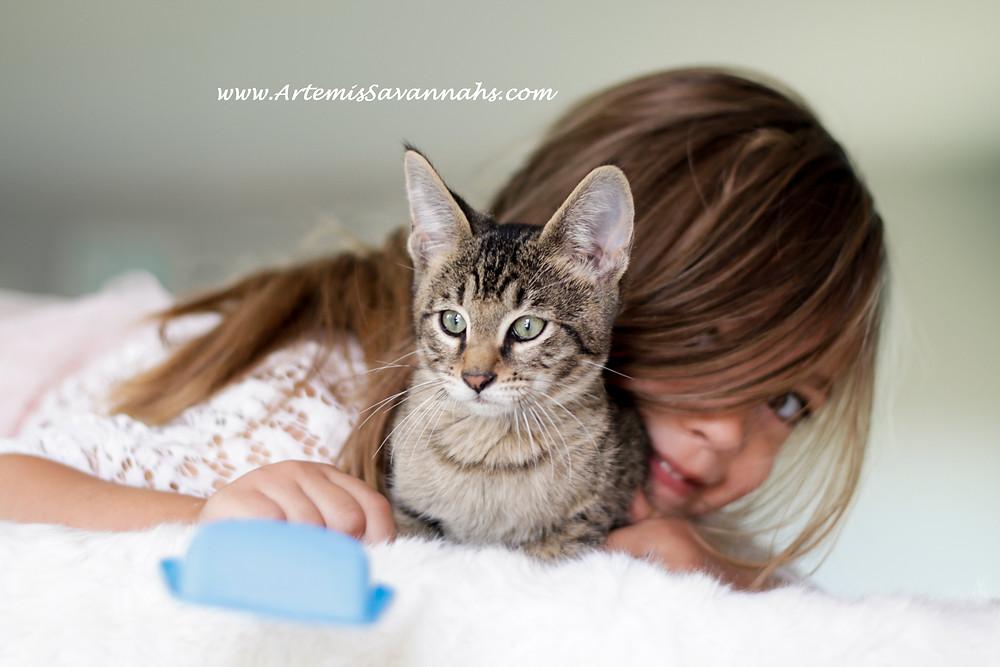 Savannah cat breeder, savannah cat for sale