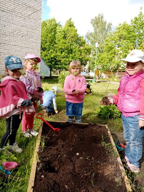 Посадили огород
