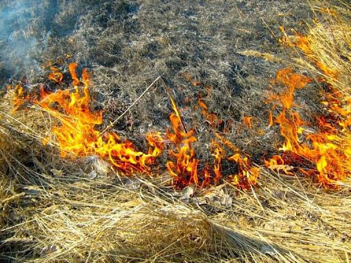 Памятка о недопустимости разведения костров (сжигания мусора) в запрещённых местах, незаконного выжи