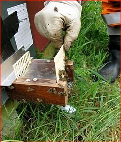 steve taber beekeeper