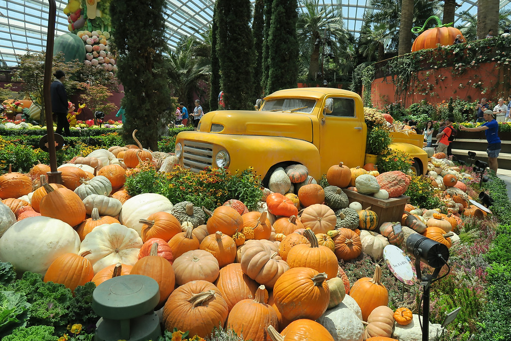 Flower Dome Autumn Display