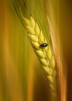 2nd -Mark Taylor -On Barley