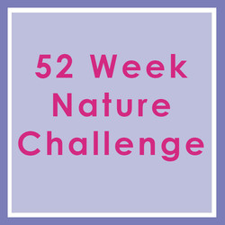 Challenge by Katy Swarbrigg