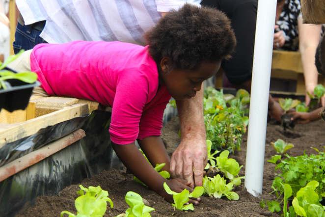 Old mutual team volunteered on site at Siseko to build water wise vegetable gardening.