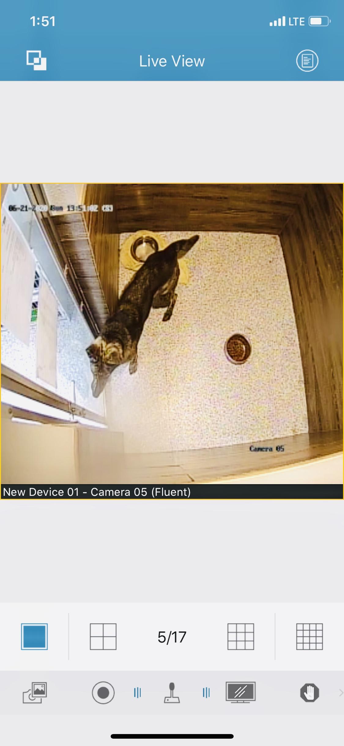Kennel camera