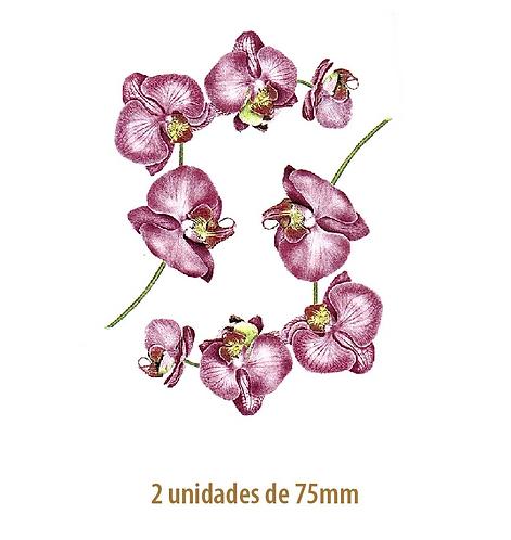 Celia - 75mm
