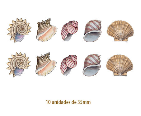 Seashell - 35mm