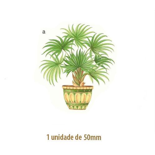 Palmeira Waikiki - 50mm