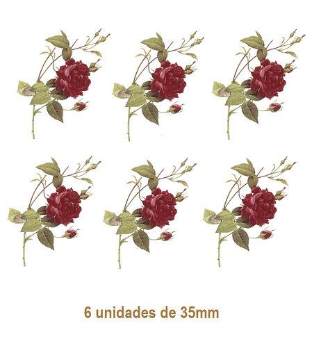 Rosa Gallica - 35mm