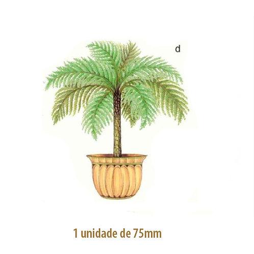 Palmeira Nassau - 75mm