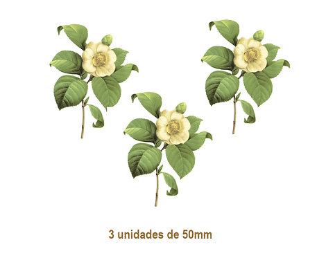 Camellia Japonica F - 50mm