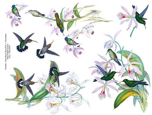 Orquídea e Beija Flor 01