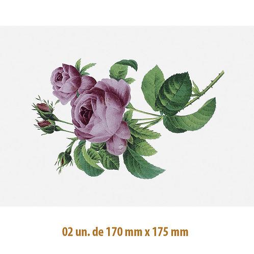 D-Rose A