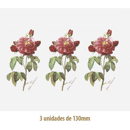 Rosa Gallica - 130mm