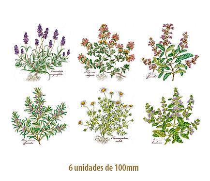 Herbs - 100mm