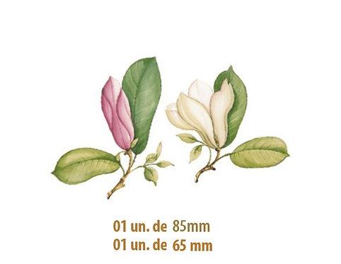 Magnolia - 85mm e 65mm