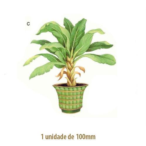 Palmeira Bermuda - 100mm