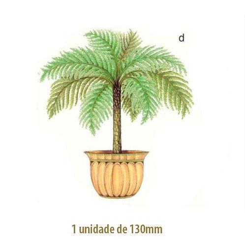 Palmeira Nassau - 130mm