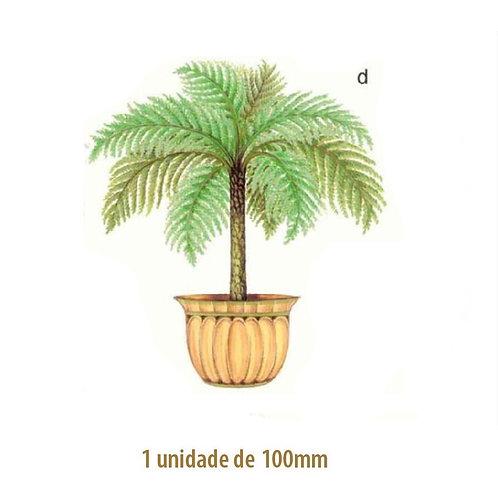 Palmeira Nassau - 100mm