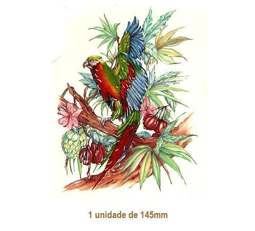 Amazonas - 145mm