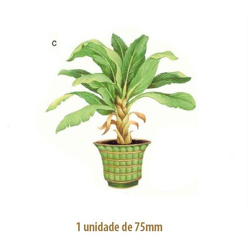 Palmeira Bermuda - 75mm