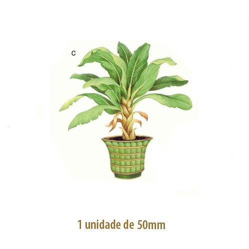 Palmeira Bermuda - 50mm