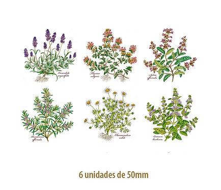 Herbs - 50mm