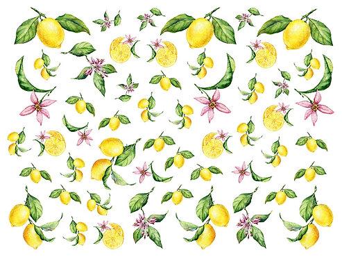 Mini Lemons - Porcelana
