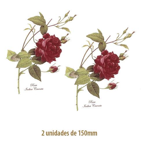 Rosa Gallica - 150mm
