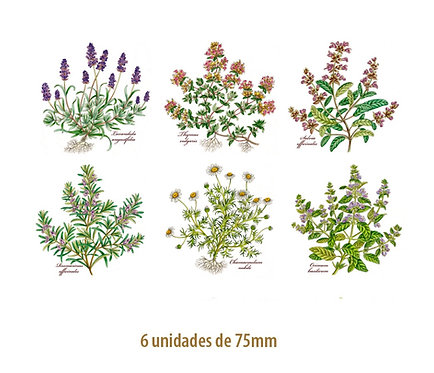 Herbs - 75mm