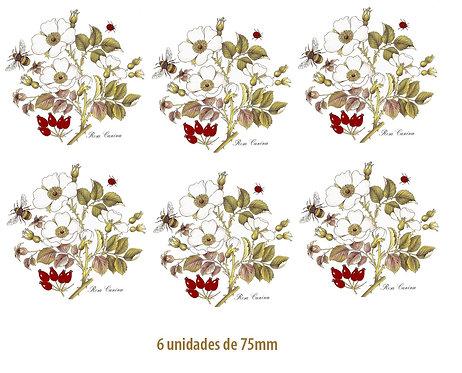 Rosa Canina - 75mm