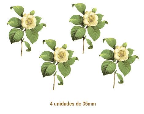 Camellia Japonica G - 35mm
