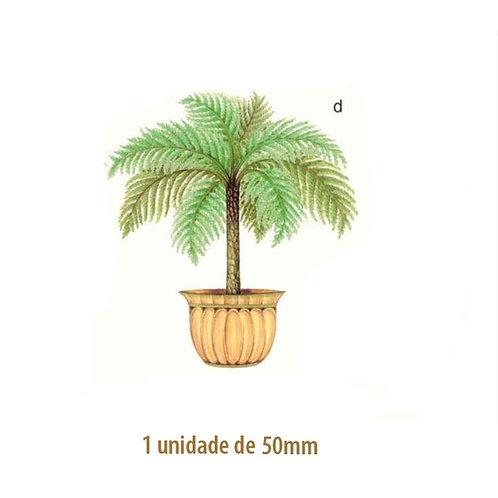 Palmeira Nassau - 50mm