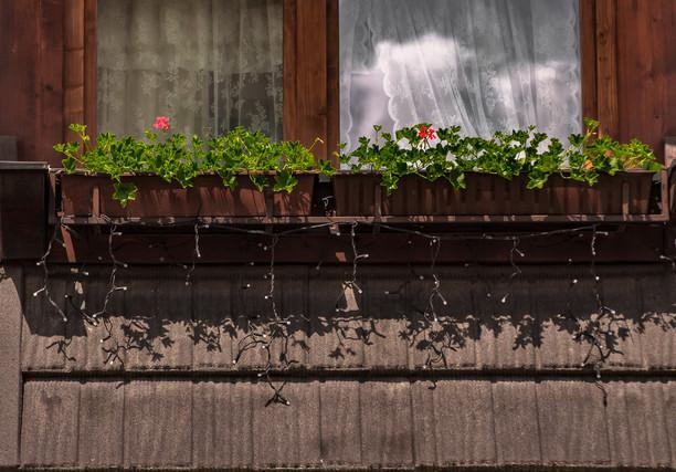 Zakopane_Flowers.jpg