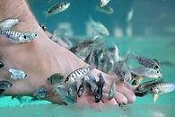 fish-massage.jpg