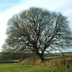 Rupert Baker - Tree Consultant