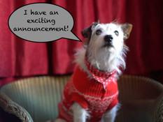 Small Dog Raises Big Money for Charity