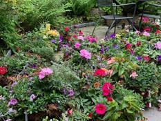 Ashburton in Bloom