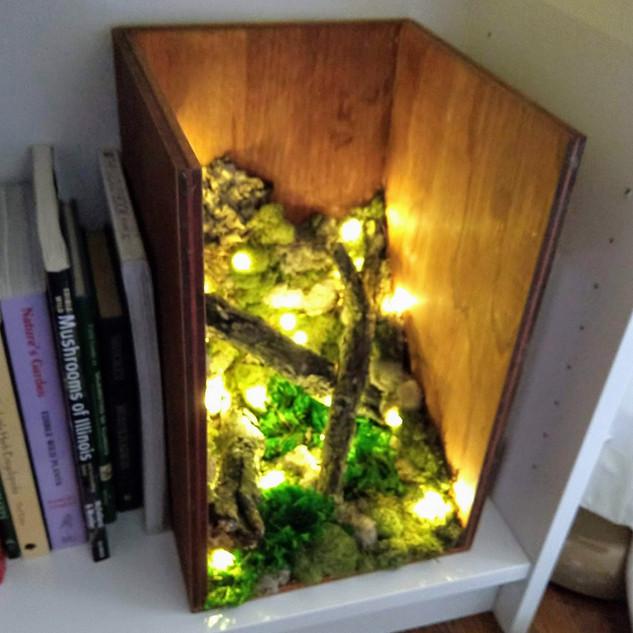 Illuminated Nature Box
