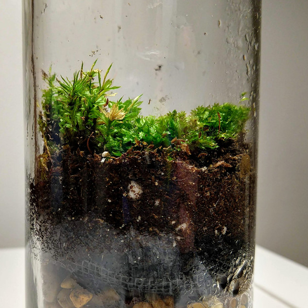 Rescued Jar Terrarium