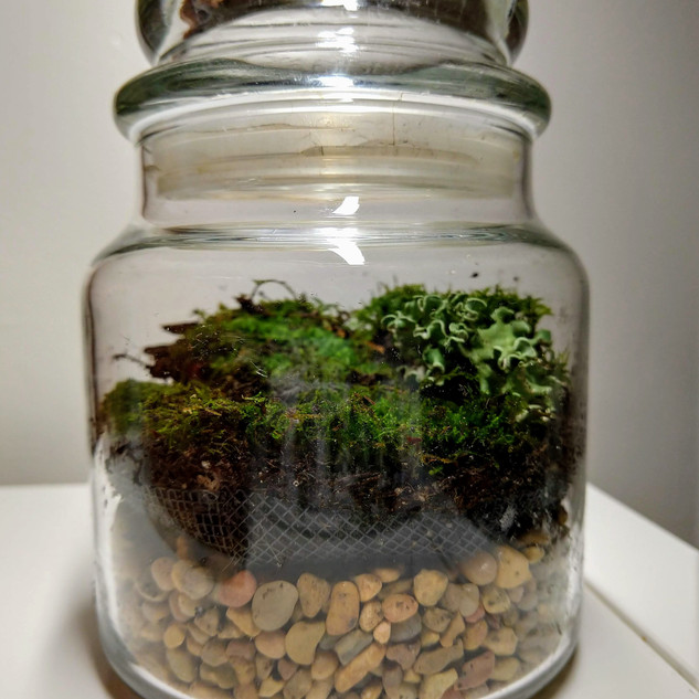 Recycled Candle Container Terrarium